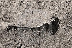 Fish Bone Stock Image - Image: 4407251