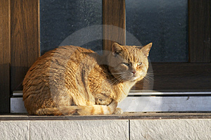 Cat Stock Image - Image: 4413481