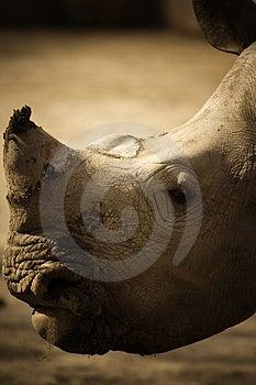 Rhinoceros 3 Royalty Free Stock Images - Image: 4422989