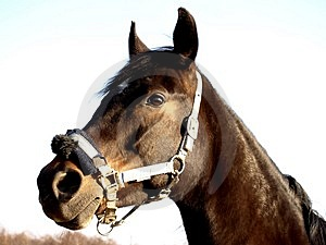 Nice Horse Royalty Free Stock Photography - Image: 4426247