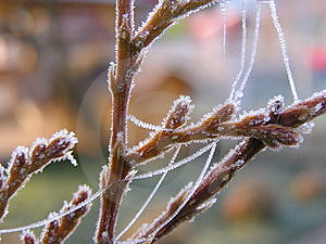 Frozen Nature Royalty Free Stock Photography - Image: 4445807
