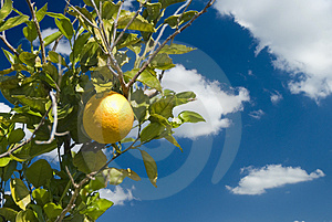 An Orange And Blue Skies Royalty Free Stock Photo - Image: 4446805