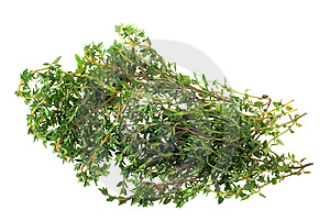 Fresh thyme herb Stock Photography