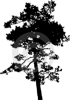 Isolated tree - 14. Silhouette