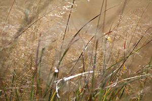 Grassy Meadow Royalty Free Stock Photos - Image: 4466048