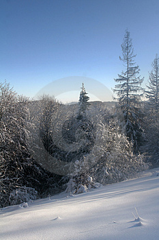 Frozen Trees Royalty Free Stock Photography - Image: 4480327