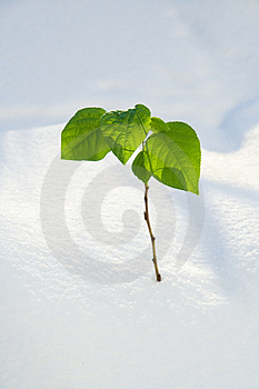 Green Spring A Branch Stock Image - Image: 4489661
