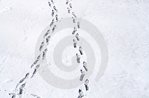 Footsteps On Snow Royalty Free Stock Photography - Image: 4492887