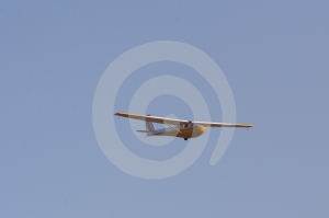Yellow glider Stock Photo