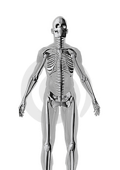 Anatomy Royalty Free Stock Images