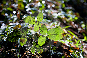 Leaves On The Sunlight Royalty Free Stock Photography - Image: 4527097