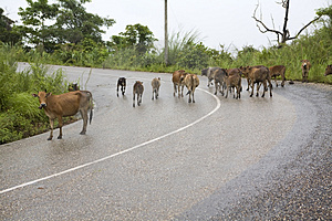 Traffic Congestion, Laos Stock Photography - Image: 4532532
