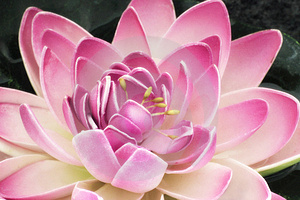 The artificial lotus Royalty Free Stock Photos