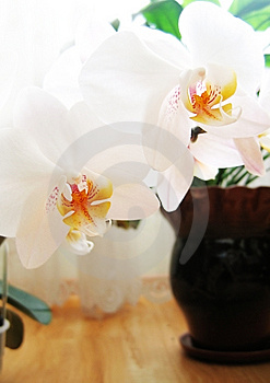 Orchid Stock Photo - Image: 4544240