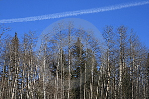 Forest Vapor Trail Royalty Free Stock Photography - Image: 4547527