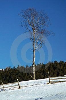 Tree Stock Photography - Image: 4559352