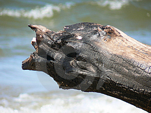 Burnt Log Stock Photography - Image: 4567002