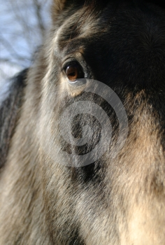 Horse Eye Stock Photo - Image: 469680