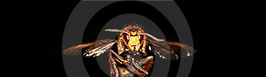 Flying Wasp Royalty Free Stock Photography - Image: 4602437