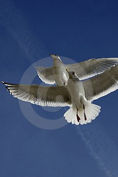 Soaring Stock Photos - Image: 4608303
