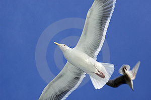 Soaring Royalty Free Stock Photography - Image: 4608437