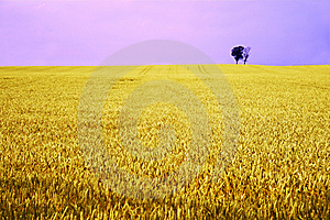 Yellow Field With Fantasy Sky Stock Photo - Image: 4638570