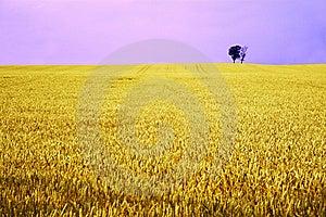 Yellow Field With Fantasy Sky Stock Photo - Image: 4638570