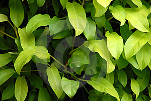 Shade Plant Royalty Free Stock Image - Image: 4687486