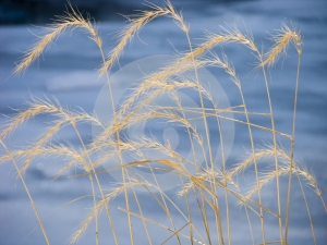 Tall Grass Pattern Royalty Free Stock Image - Image: 471756