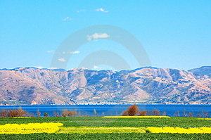 The Rape Is Spent On Erhai Lake Lakeside Royalty Free Stock Photos - Image: 4701458