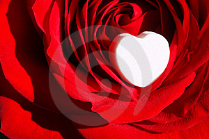 Rote Rose Mit Weißen Herzen-Makro-Close-Up-Herzen Mit Weißen Raum.