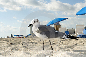 Seagull On The Beach Royalty Free Stock Images - Image: 4723829