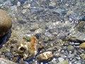 Sea water, pebble