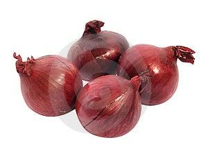 Onion Free Stock Photos