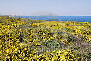 Yellow Crete Royalty Free Stock Photos - Image: 4757218