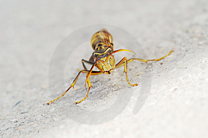 Wasp Stock Photos - Image: 4779323