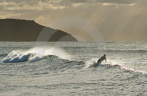 The Surfer's Silhouette Royalty Free Stock Photo - Image: 4785445