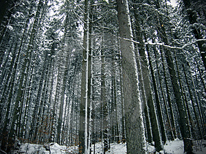 Forest Trees Stock Photos - Image: 489453
