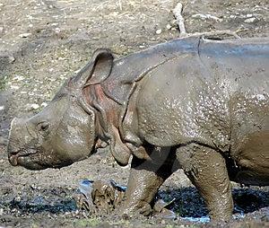 Mud Baby Royalty Free Stock Photo - Image: 489595