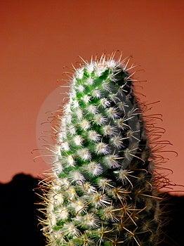 Cactus Stock Photography - Image: 4802482