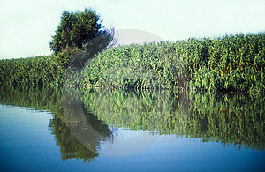 River Vegetation Royalty Free Stock Images - Image: 4802889