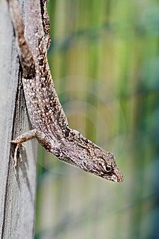 Lizard Stock Image - Image: 4809281