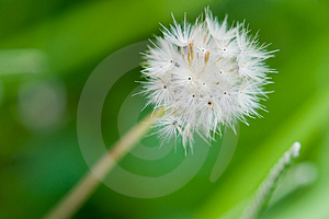 Little Dandelion Struggle To Survive Stock Photography - Image: 4843732