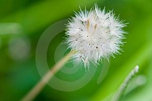 Little Dandelion Struggle To Survive Stock Photography - Image: 4843732