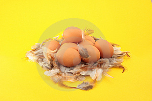 Chickens Eggs In Nest Royalty Free Stock Image - Image: 4854676