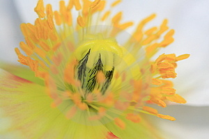 Beautiful Flower Stamen Stock Images - Image: 4872874