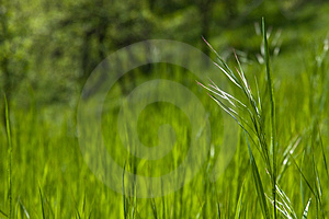 Piece of grass Free Stock Photo