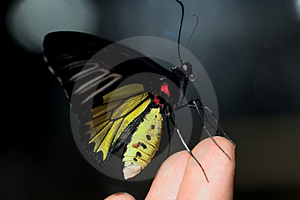 Butterfly On Fingers Stock Photos - Image: 4881973