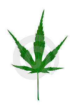 Marijuana - Cannabis Royalty Free Stock Photo
