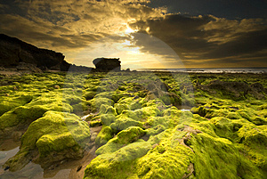 Low Tide Royalty Free Stock Images - Image: 4911069